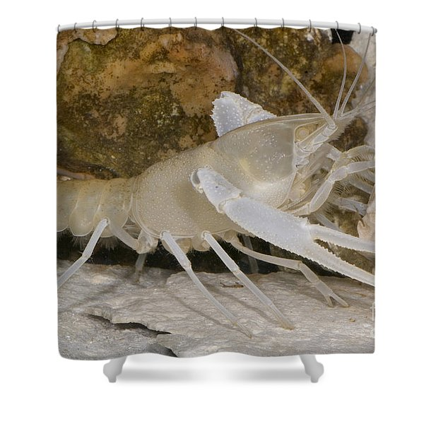 Florida Cave Crayfish Shower Curtain