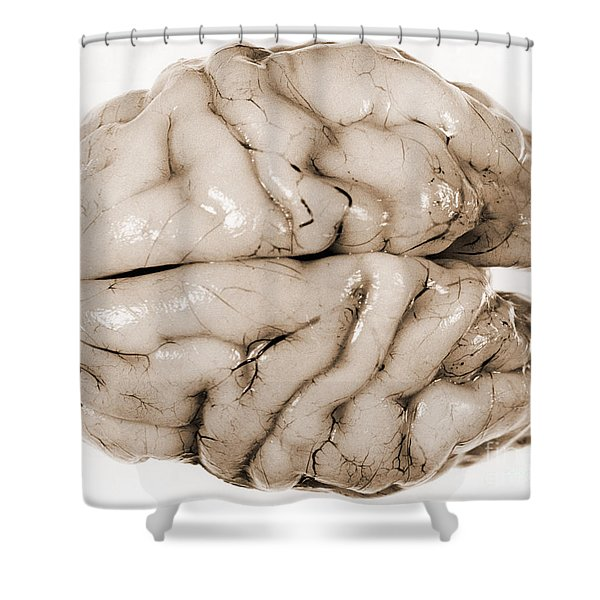 Brain Shower Curtain