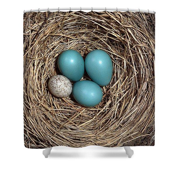 Robins Nest And Cowbird Egg Shower Curtain