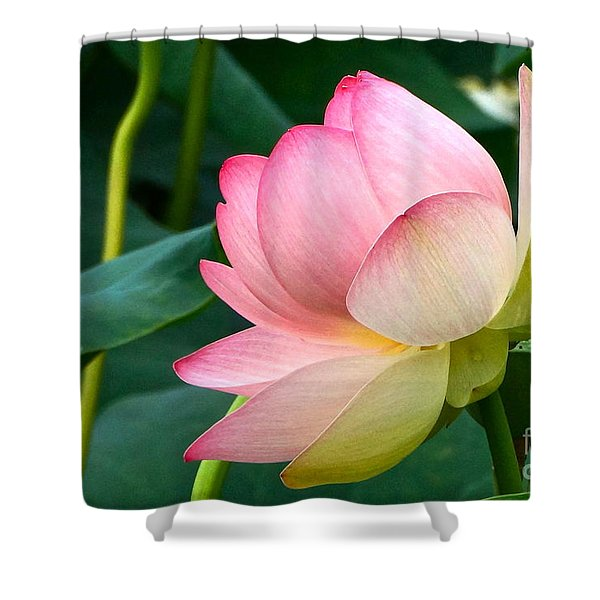 A Gentle Unravelling Shower Curtain