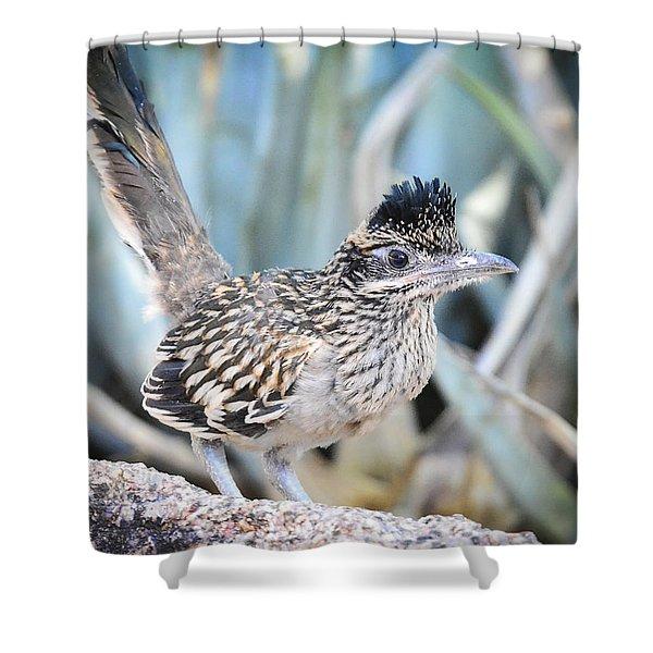 A Juvenile Greater Roadrunner  Shower Curtain