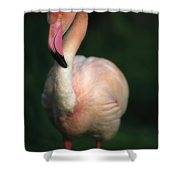 A Pink Flamingo Stands On One Leg Shower Curtain