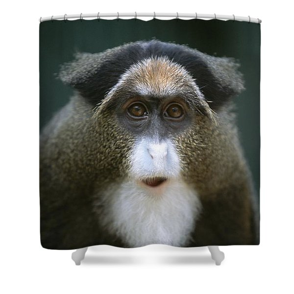 A Portrait Of A Debrazzas Monkey Shower Curtain