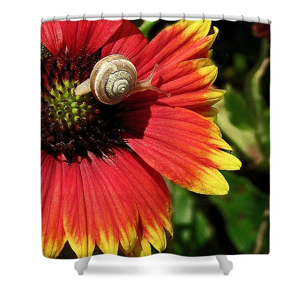 A Snail's Pace Shower Curtain