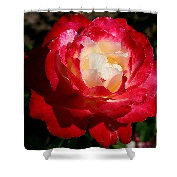 A Unique Rose Shower Curtain