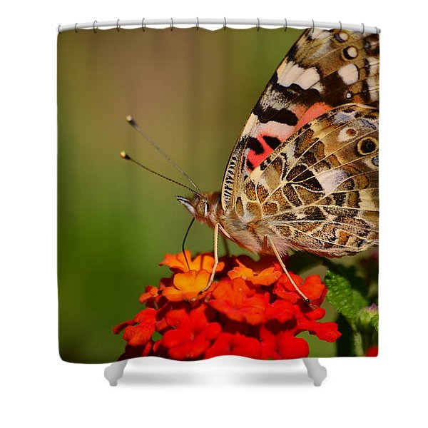 A Wing Of Beauty Shower Curtain