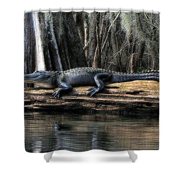 Alligator Sunning Shower Curtain
