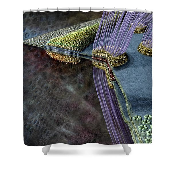 Animal Cell Junctions Shower Curtain
