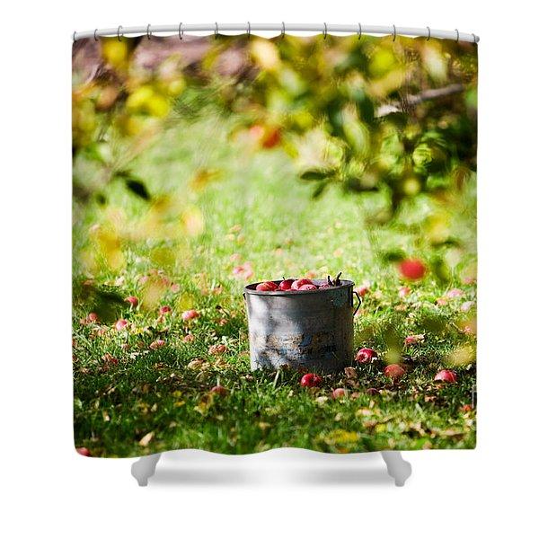 Apples In Bucket Shower Curtain