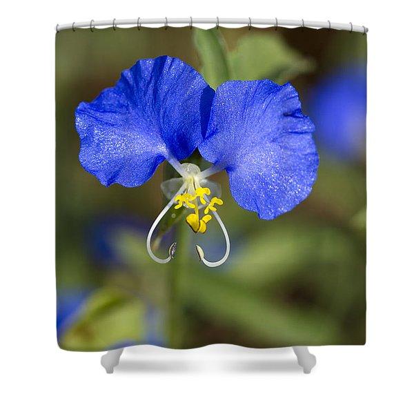 Asiatic Dayflower - Commelina Communis Shower Curtain