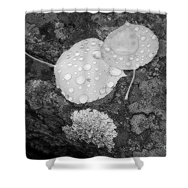 Aspen Leaves In The Rain Shower Curtain