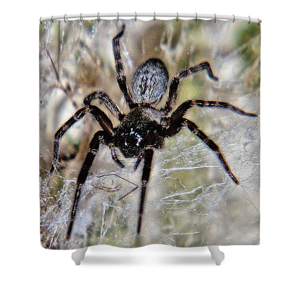 Australian Spider Badumna Longinqua Shower Curtain