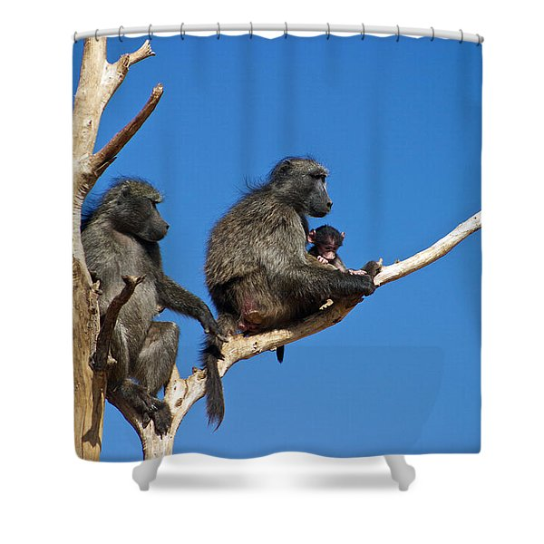 Baboon Family Namibia Shower Curtain