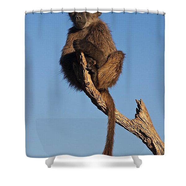 Baboon Sentry Namibia Shower Curtain