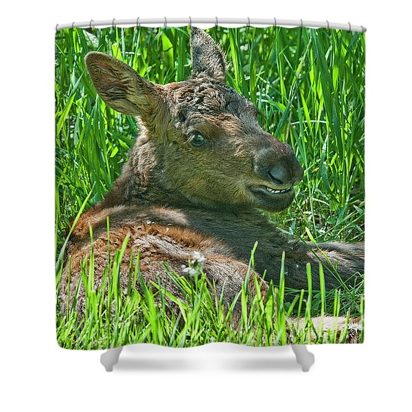 Baby Moose Shower Curtain