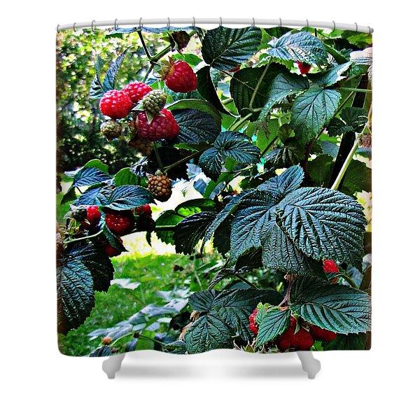 Backyard Berries Shower Curtain