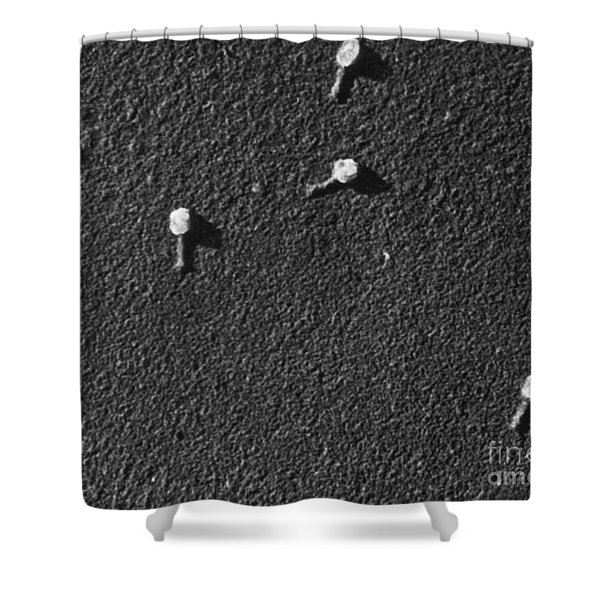 Bacteriophage T2 Shower Curtain