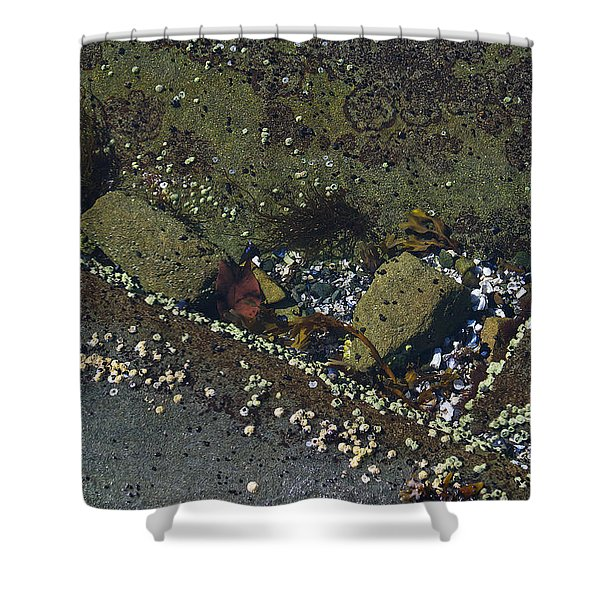 Barnacles And Rocks Shower Curtain
