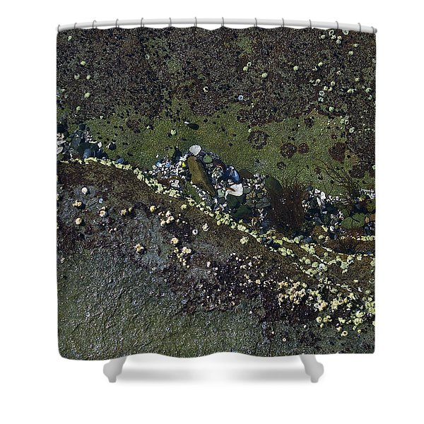 Barnacles And Seaweed Shower Curtain