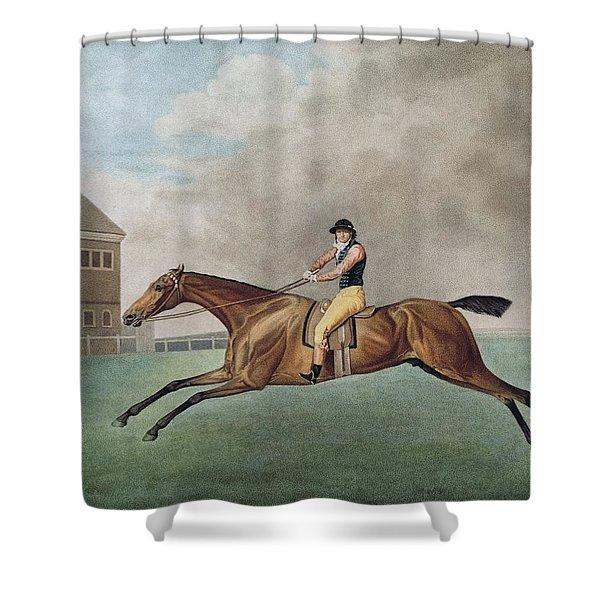 Baronet Shower Curtain