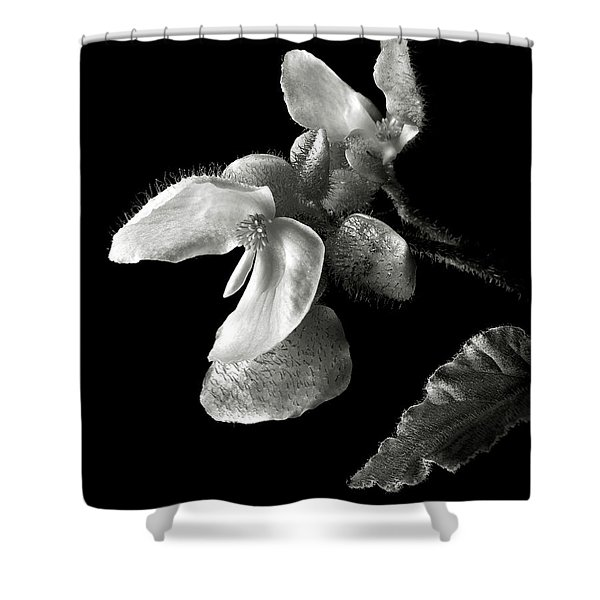 Begonia In Black And White Shower Curtain