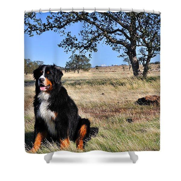 Bernese Mountain Dog In California Chaparral Shower Curtain