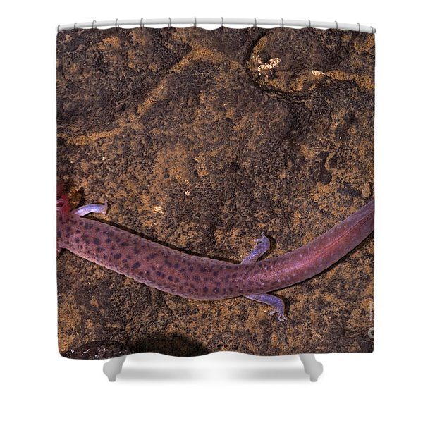 Big Mouth Cave Salamander Shower Curtain