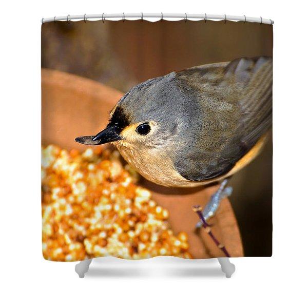 Bird With Sunflower Seed Shower Curtain
