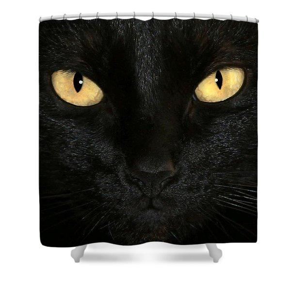 Black Cat Halloween Card Shower Curtain