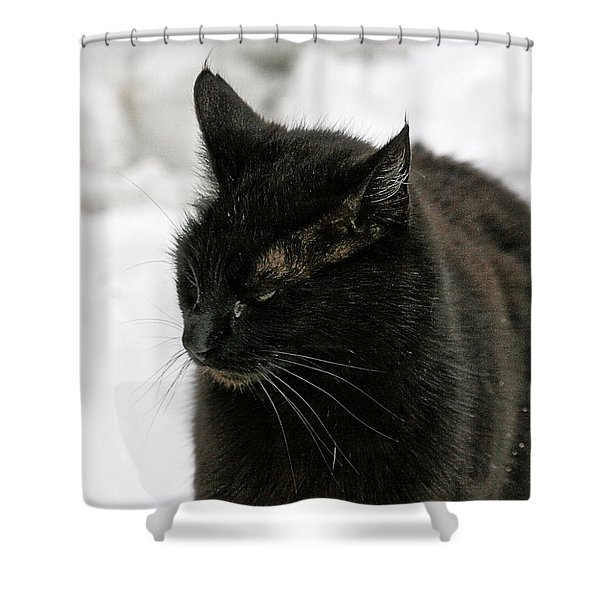 Black Cat White Snow Shower Curtain