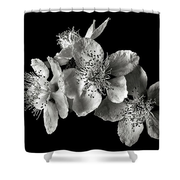 Blackberry Flowers In Black And White Shower Curtain