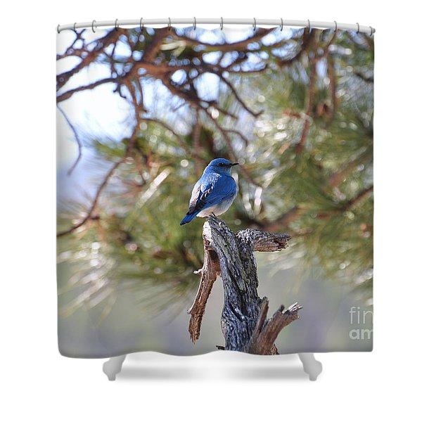 Blue Boy Shower Curtain