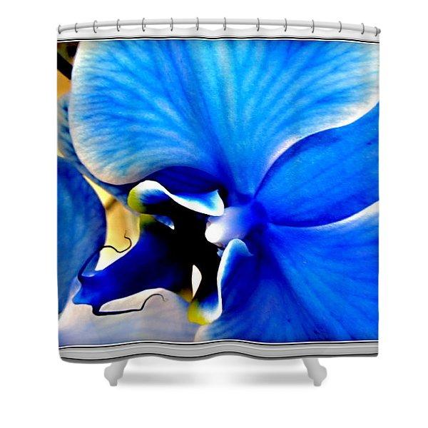 Blue  Diamond Orchidaceae Shower Curtain