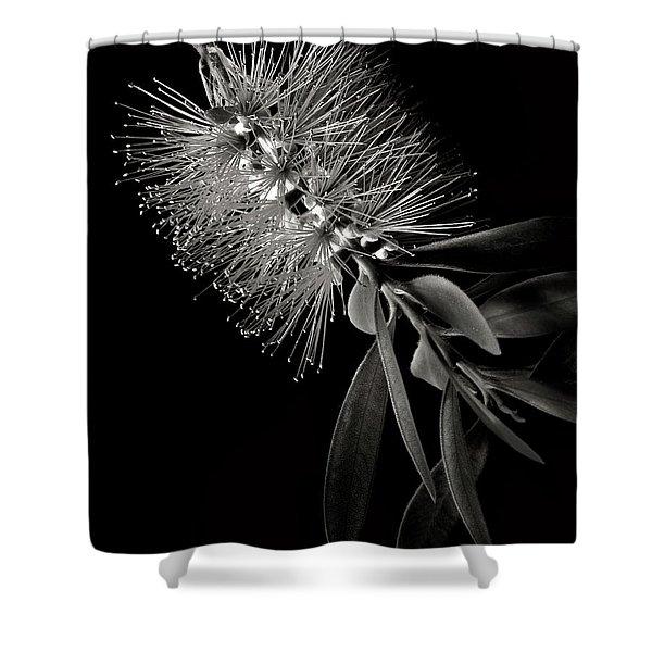 Bottlebrush In Black And White Shower Curtain