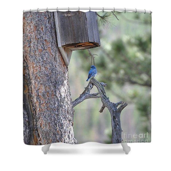 Boy Blue Shower Curtain