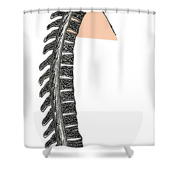 Brain And Spinal Cord Shower Curtain