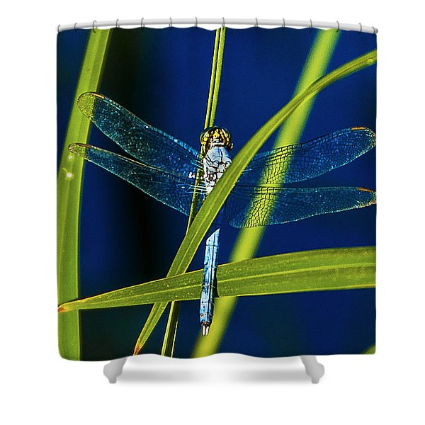 Brilliant Dragon Fly Shower Curtain