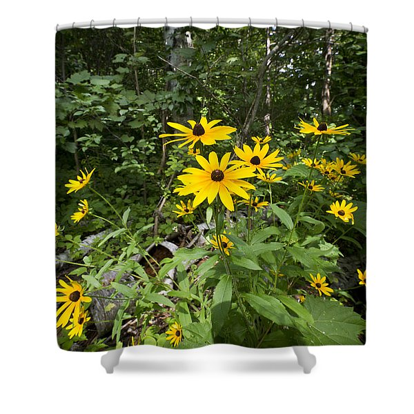 Brown-eyed Susan In The Woods Shower Curtain