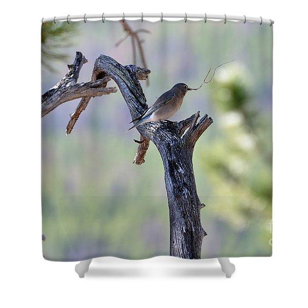 Building Her Nest Shower Curtain