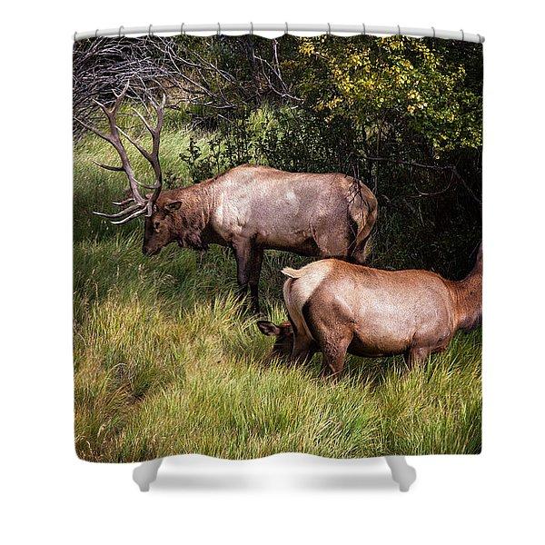 Bull Elk 7x7 Shower Curtain