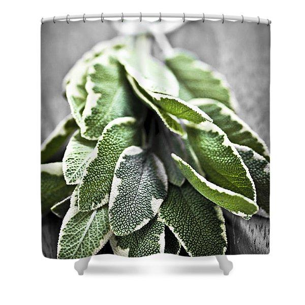 Bunch Of Fresh Sage Shower Curtain