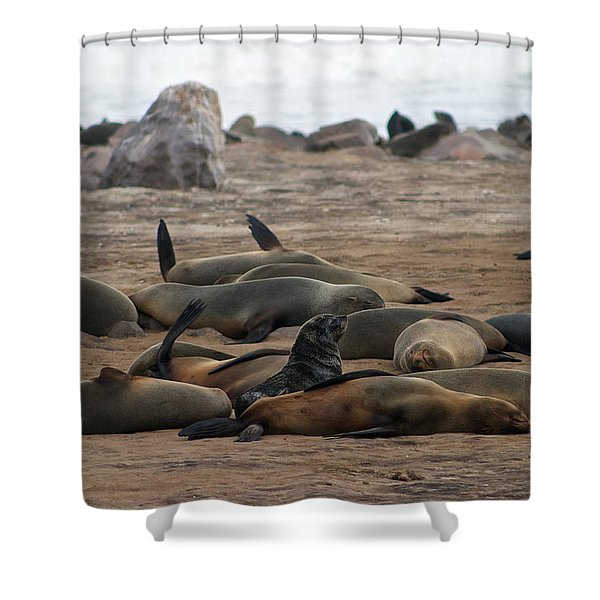Cape Cross Seal Colony Shower Curtain