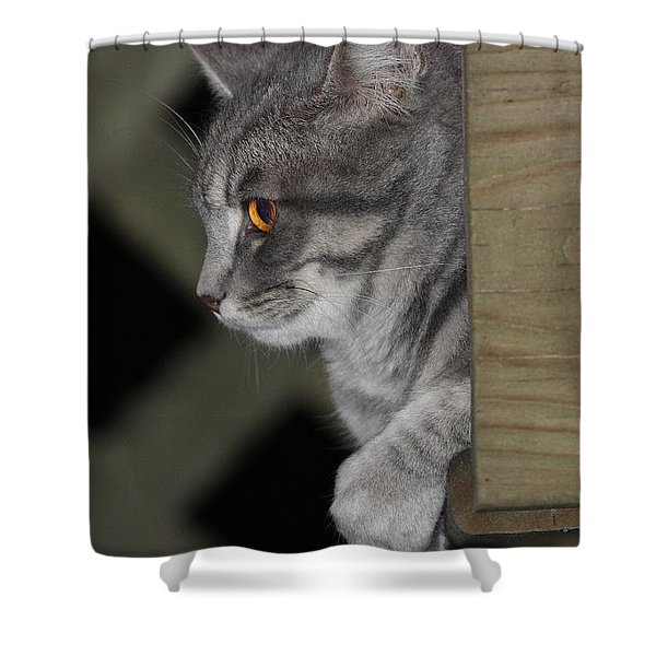 Cat On Steps Shower Curtain
