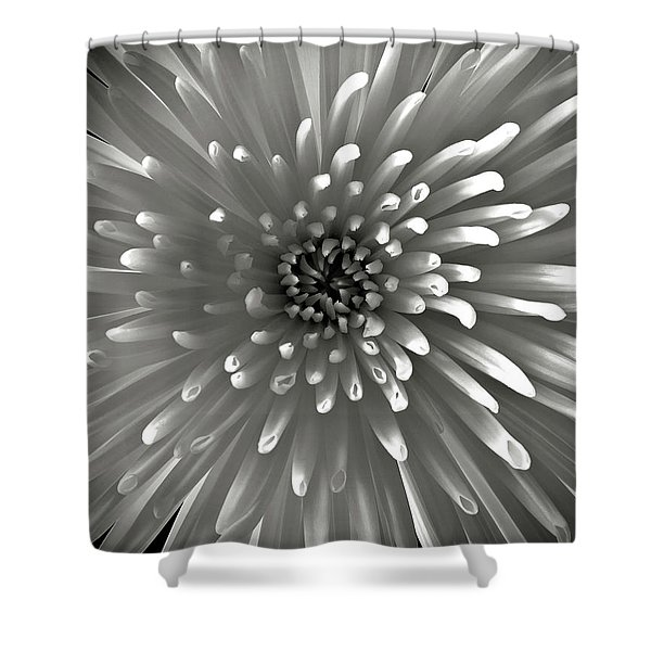 Chrysanthemum In Black And White Shower Curtain