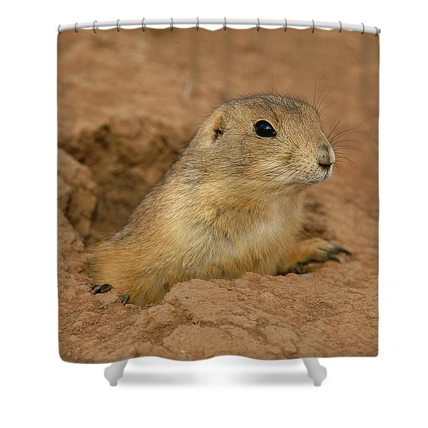 Close View Of A Prairie Dog Emerging Shower Curtain