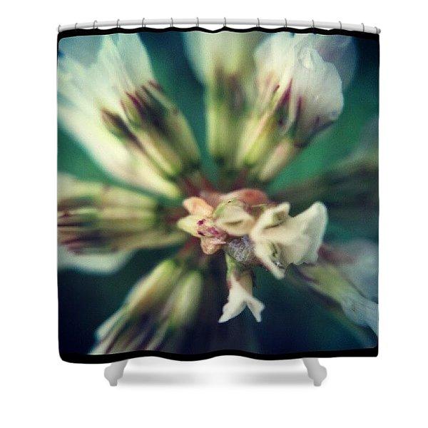 Clover Flower Close Up Shower Curtain