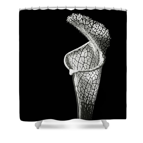 Cobra Lily In Black And White Shower Curtain