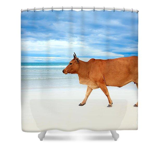 Cow On The Beach Shower Curtain