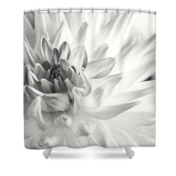 Dahlia Flower 02 Shower Curtain