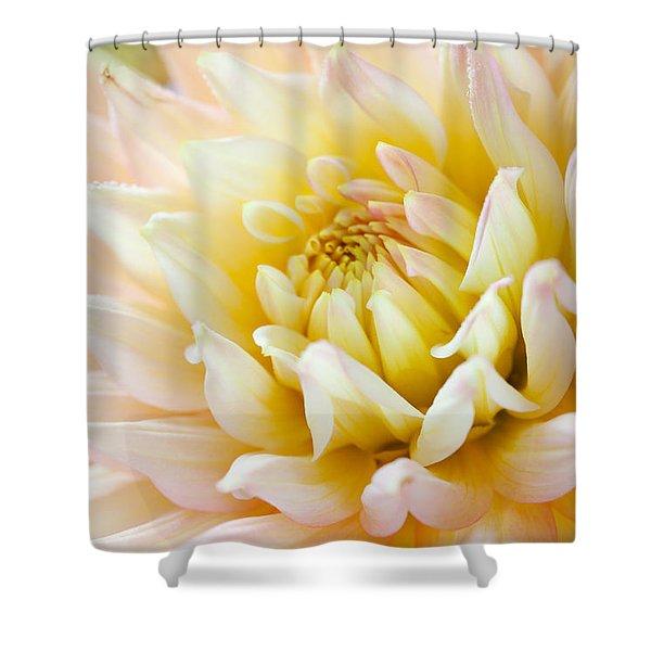 Dahlia Flower 03 Shower Curtain